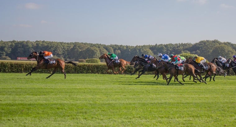 can-results-horse-races-found-internet