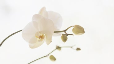 How Can You Revive an Orchid?