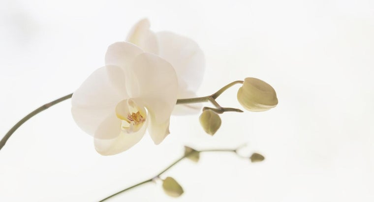 can-revive-orchid