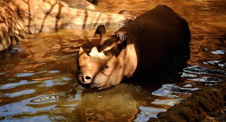 can-rhinos-swim