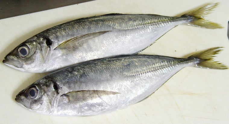 can-rid-strong-fishy-taste-fish