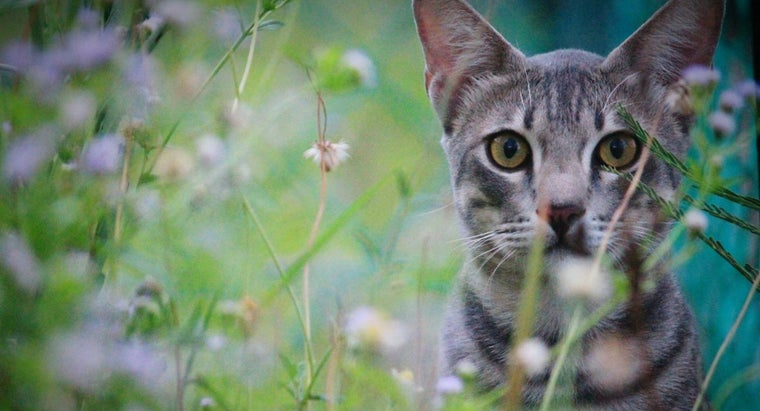 can-ringworm-cats-treated-home-remedies