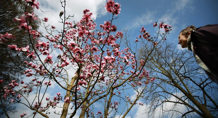 can-root-cutting-magnolia-tree