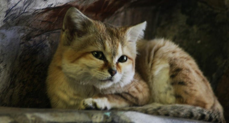 can-sand-cats-pets