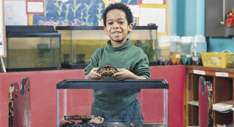 can-set-up-turtle-tank