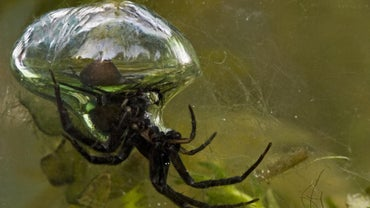 Can Spiders Swim?