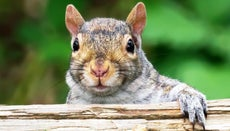 Can Squirrels Damage My Home?