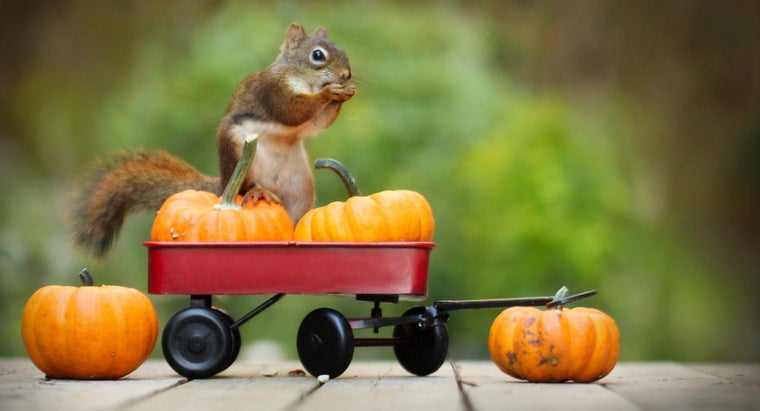 can-stop-squirrels-eating-pumpkins