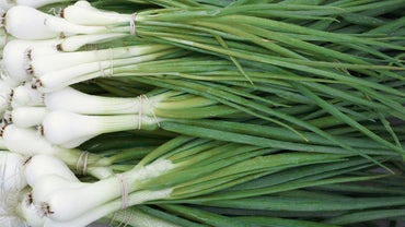 What Can You Substitute for Scallions?