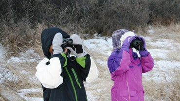 How Can You Teach Bird Identification?