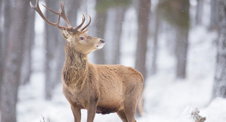can-tell-age-deer