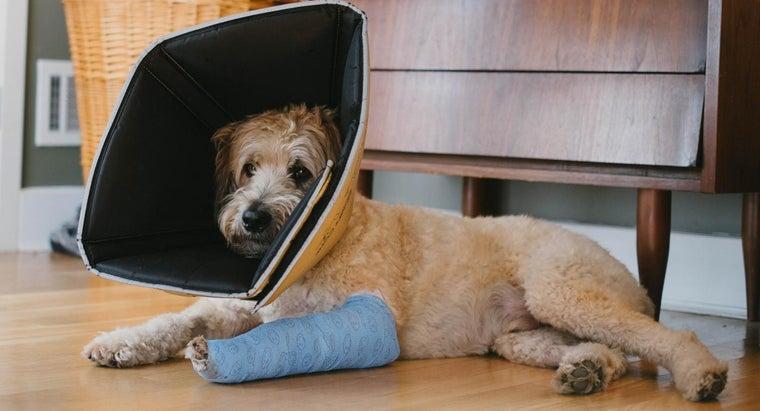 can-tell-dog-broken-leg