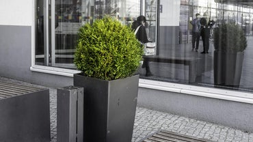When Can You Transplant a Boxwood Shrub?