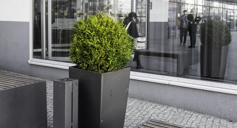 can-transplant-boxwood-shrub