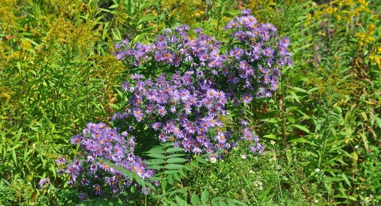 can-use-bleach-kill-weeds-grass