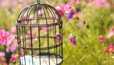 Can You Keep a Hummingbird As a Pet?