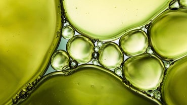 What Is Canola Oil?