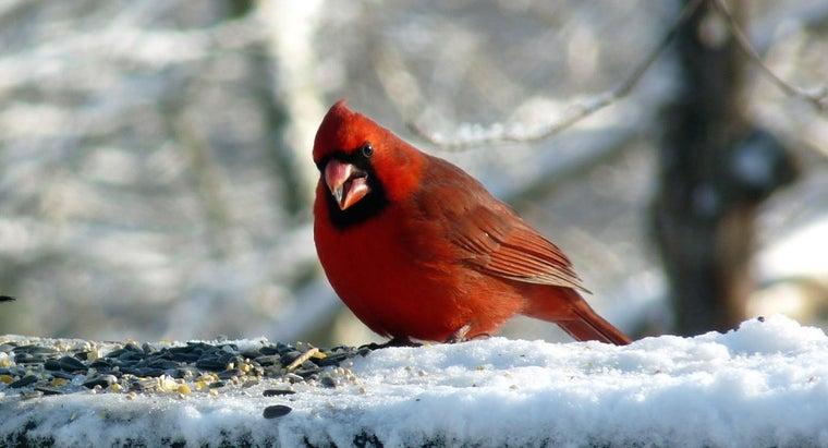 cardinals-eat