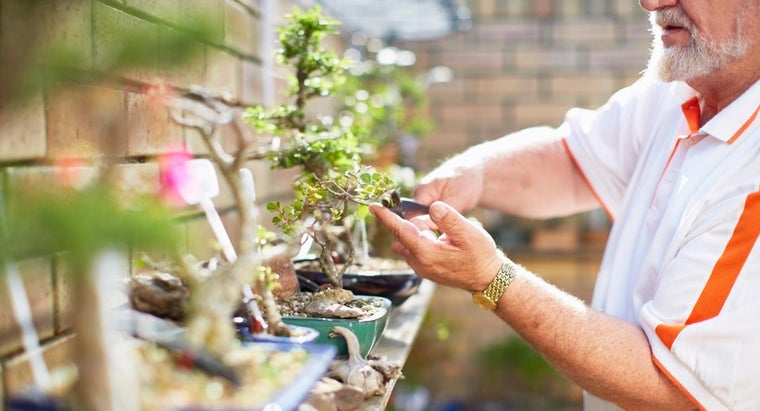 care-bonsai-tree