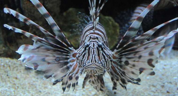 care-lionfish