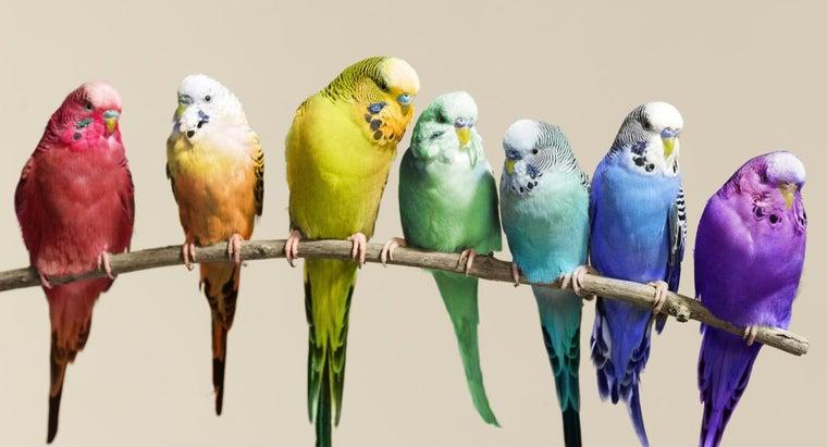 care-parakeet-eggs-breeding-birds