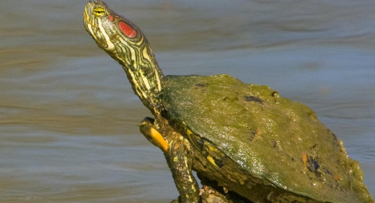 care-southern-painted-turtle