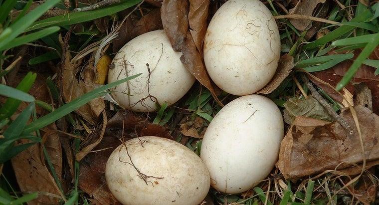 care-unhatched-bird-egg