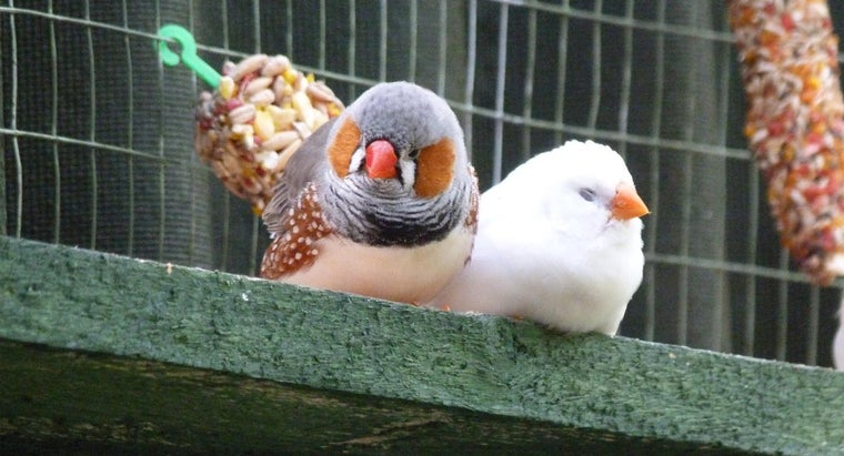 care-zebra-finch
