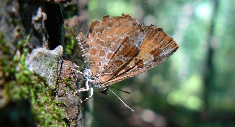 carnivorous-butterflies