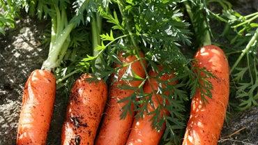 How Do Carrots Reproduce?