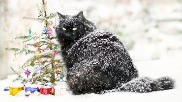 Why Does My Cat Have Dandruff?