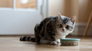 What Is the Best Cat Food for Indoor Cats?