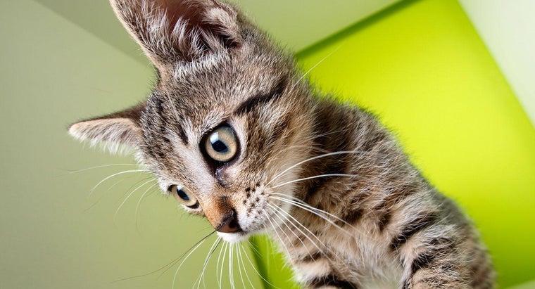 cat-whiskers-lose-s-sense-balance