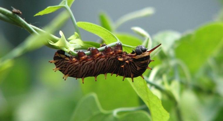 caterpillars-live