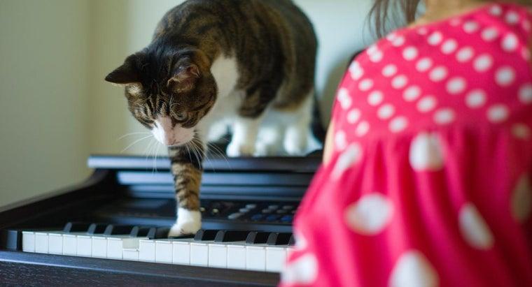 cats-hear