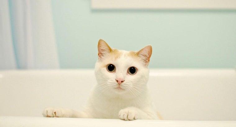 cats-need-baths