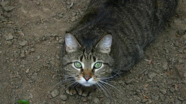 Why Do Cats Roll Around in the Dirt?