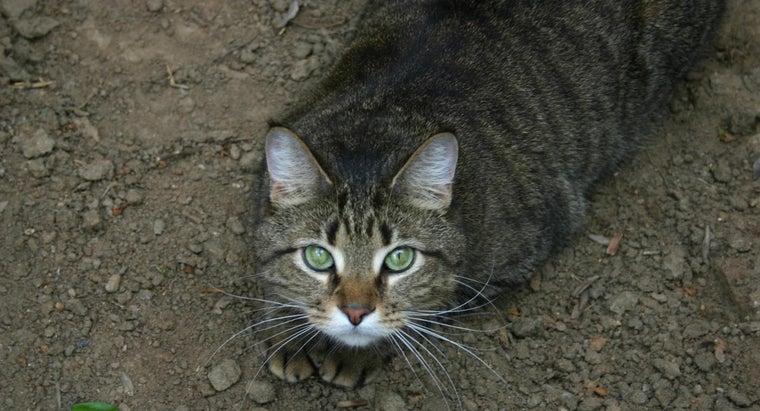cats-roll-around-dirt