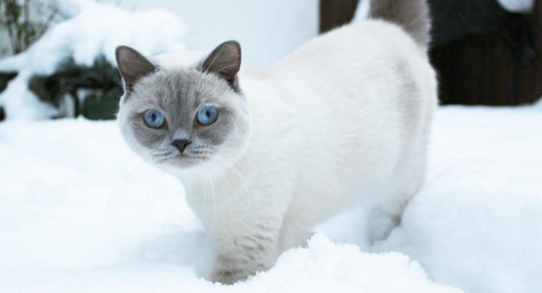 cats-thicker-coat-winter