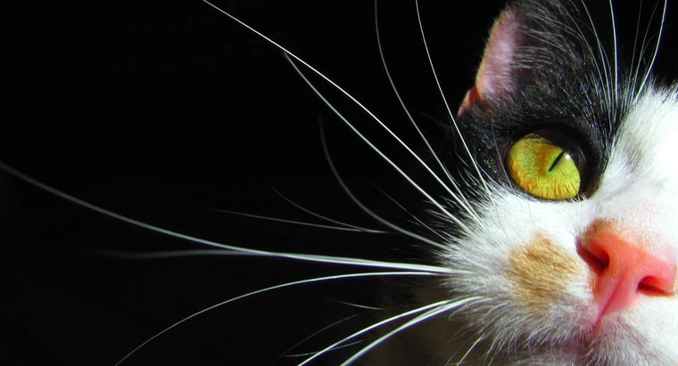 cats-whiskers