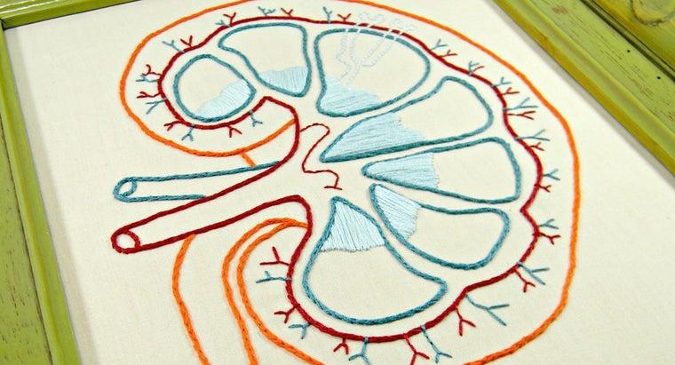 causes-elevated-creatinine-levels-kidneys