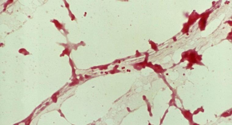 causes-spinal-meningitis