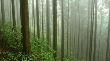 Where Do Cedar Trees Grow?