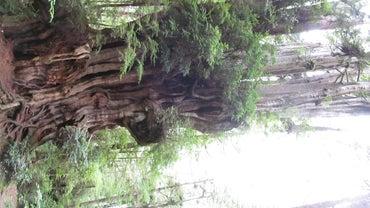 Does Cedar Wood Rot?