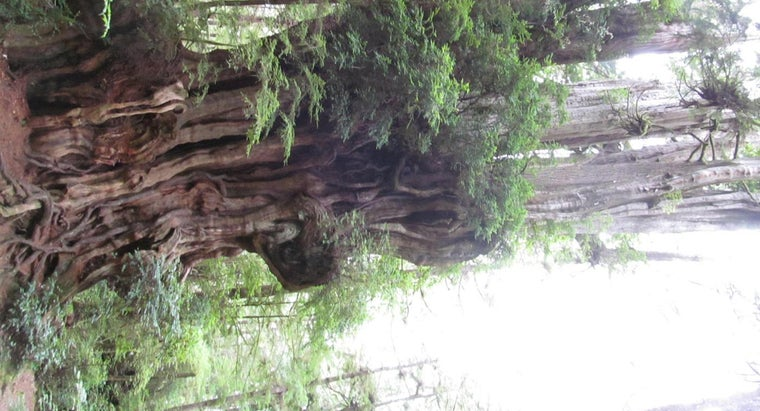 cedar-wood-rot