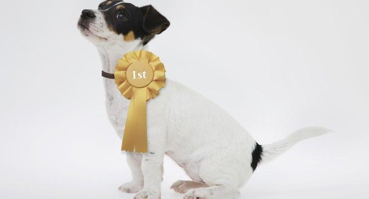 champion-sired-puppy