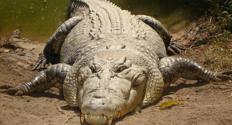 characteristics-crocodile