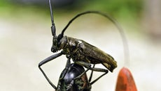 What Are the Characteristics of Insects?
