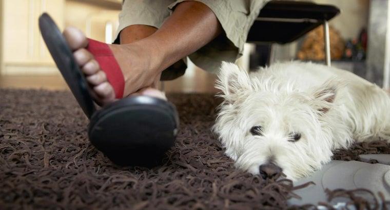 characteristics-miniature-scottish-terrier