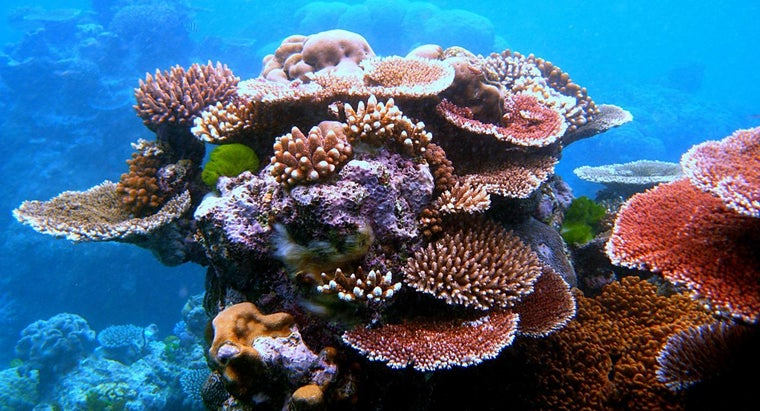 characteristics-multicellular-organisms